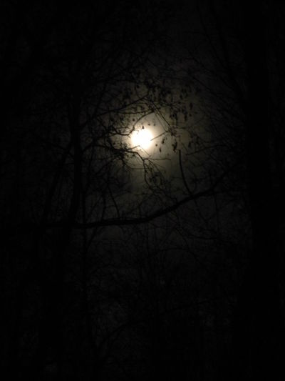 Beauty In Nature Bright Night Full Moon Full Moon Night  Low Angle View Moon Moon Moon Light Moonlight Nature Night Night Sky Nighttime No People Outdoors Sky Sky And Clouds Supermoon Tranquility Tree