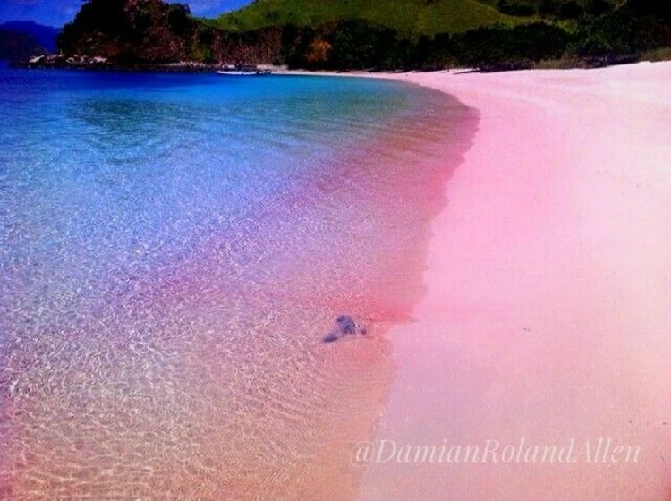Nature Pink Color Beauty In Nature Beach Beachphotography Beach Holiday Beachview Sand Beach Sands Pinksandbeach Lombok-Indonesia Lombokisland Lombok Fotography Visitlombok Visitindonesia2017 Pinkbeachlombok DamianRolandAllen