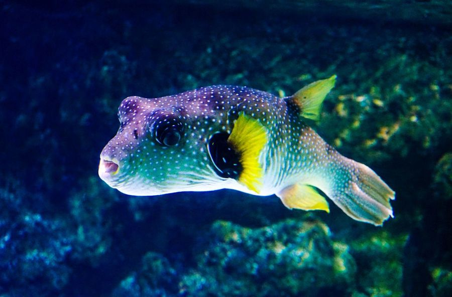 Exotic fish Sea Life Multi Colored Strange Animals Animals Animal Wildlife Aquarium Exotic Fish Exotic Underwater One Animal Sea Life Fish Animals In The Wild Animal Themes UnderSea Beauty In Nature Sea Nature Animal Markings EyeEmNewHere