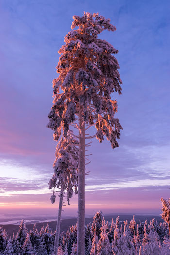Bathing in color Beauty In Nature EyeEm Gallery Feldberg Germany Photos Official EyeEm © Illuminated Landscape_Collection Nature No People Outdoors Sky Sunset_collection Tranquil Scene Tranquility Tree EyeEmNewHere