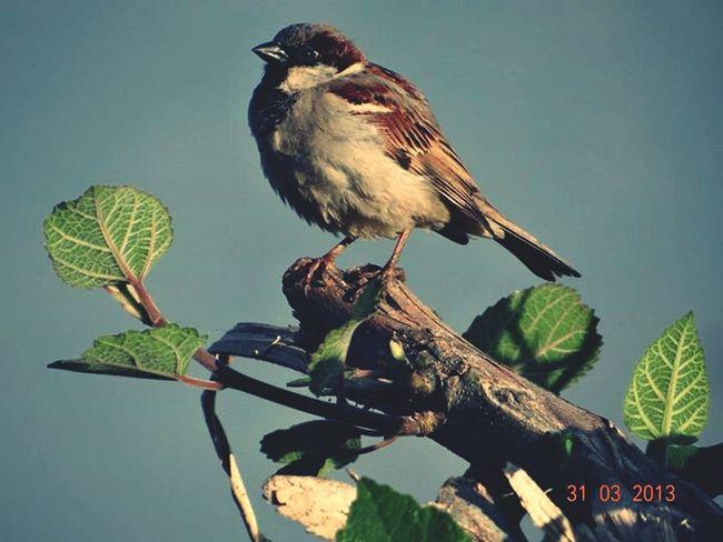 Bird Random Branch Nature