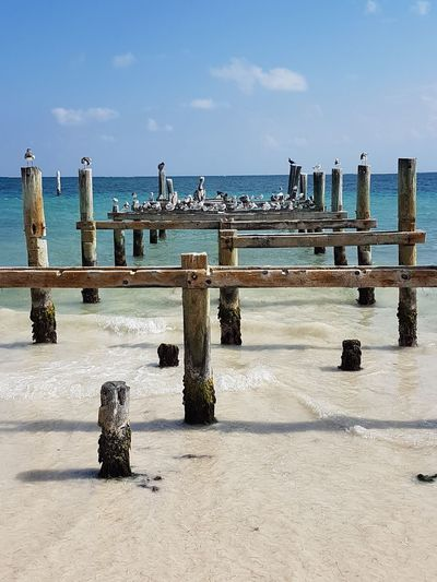 Pier Piers Seabirds Perched Birds Ocean View Outdoors Sand Sky Day Water Sea Horizon Over Water No People