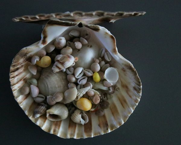 Bretagne Shell Collection Shell Photography Outdoors Sealife Seashells Naturephotography No People FinistèreNord