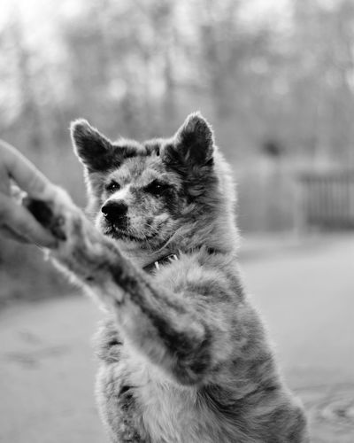 Take me by the hand ♡ Bnw Dogs Of EyeEm Dog Love Dog Blackandwhite