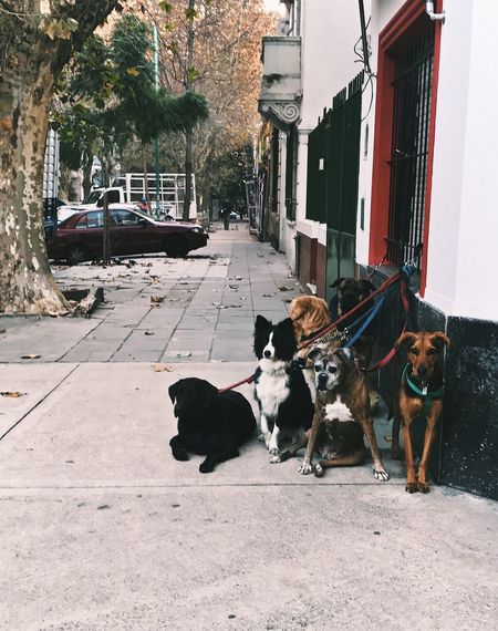 Dog Pets Domestic Animals Mammal Animal Themes Built Structure Building Exterior Architecture Day No People Outdoors Buenosaires Belgrano