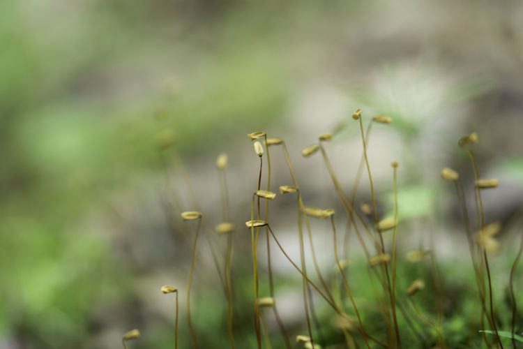 Lichen Macro Photography Moss & Lichen Mossy Nature Nature Photography Beauty In Nature Close-up Focus On Foreground Grass Green Color Growth Land Macro Macro_collection Moss Moss Close Up Natur Nature Nature_collection Outdoors Plant Plant Stem Selective Focus Timothy Grass
