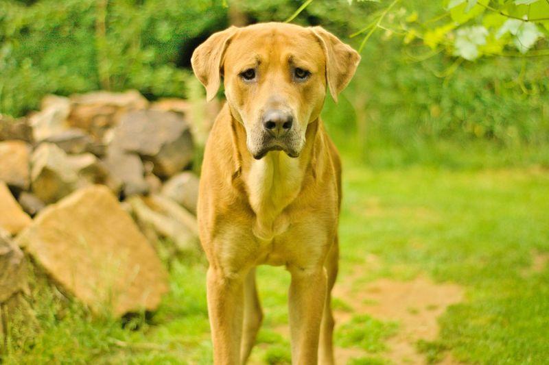 Ein treuer Begleiter 50mm F1.8 Festbrennweite Grün Steine Stones Gold Colored Gold Treu Treue Seele Pet Dog Hund Hundefotografie Cheerful First Eyeem Photo