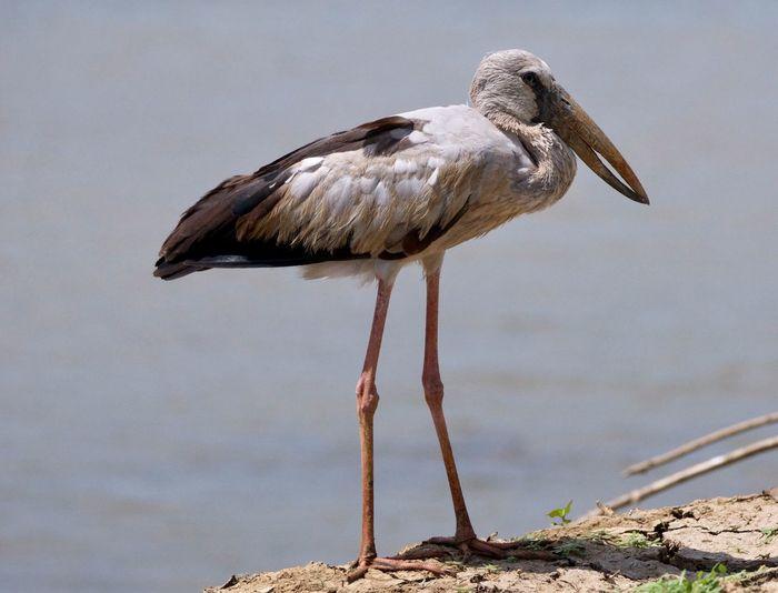 Bird. Sri Lanka. 3629466