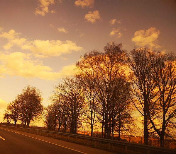 Silhouette trees by road against sky during sunset