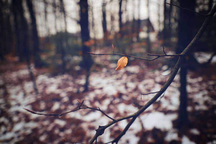 Autumn Autumn Colors Life Lonely Vignette Beauty In Nature Branch Close-up Day Dried Plant Flower Flower Head Focus On Foreground Forest Fragility Freshness Growth Leaf Nature No People Outdoors Plant Tree Twig