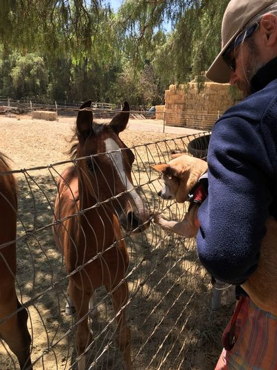 Man Holding Dog By Horse At Zoo