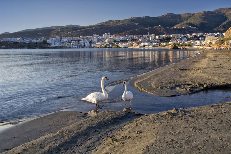 Swans Perching On Shore Against Sea At Beach