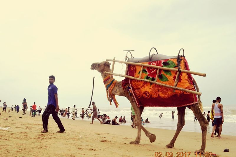 Camel for Ride