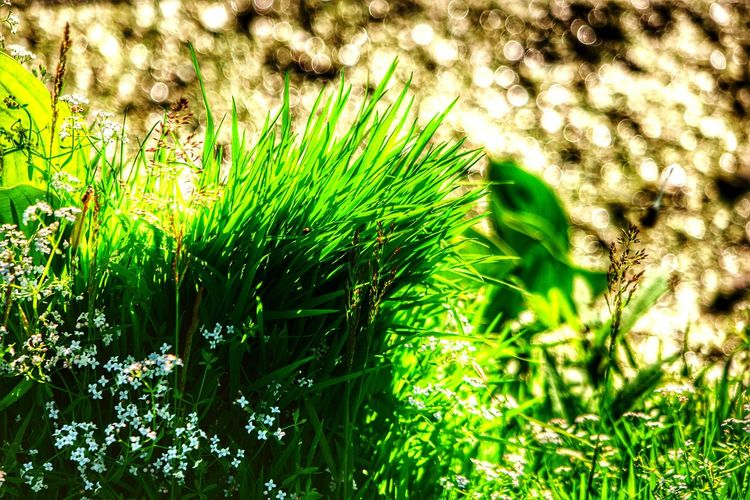 43 Golden Moments Grass Grass Photography Grass And Flowers Nature Nature_collection Nature Photography