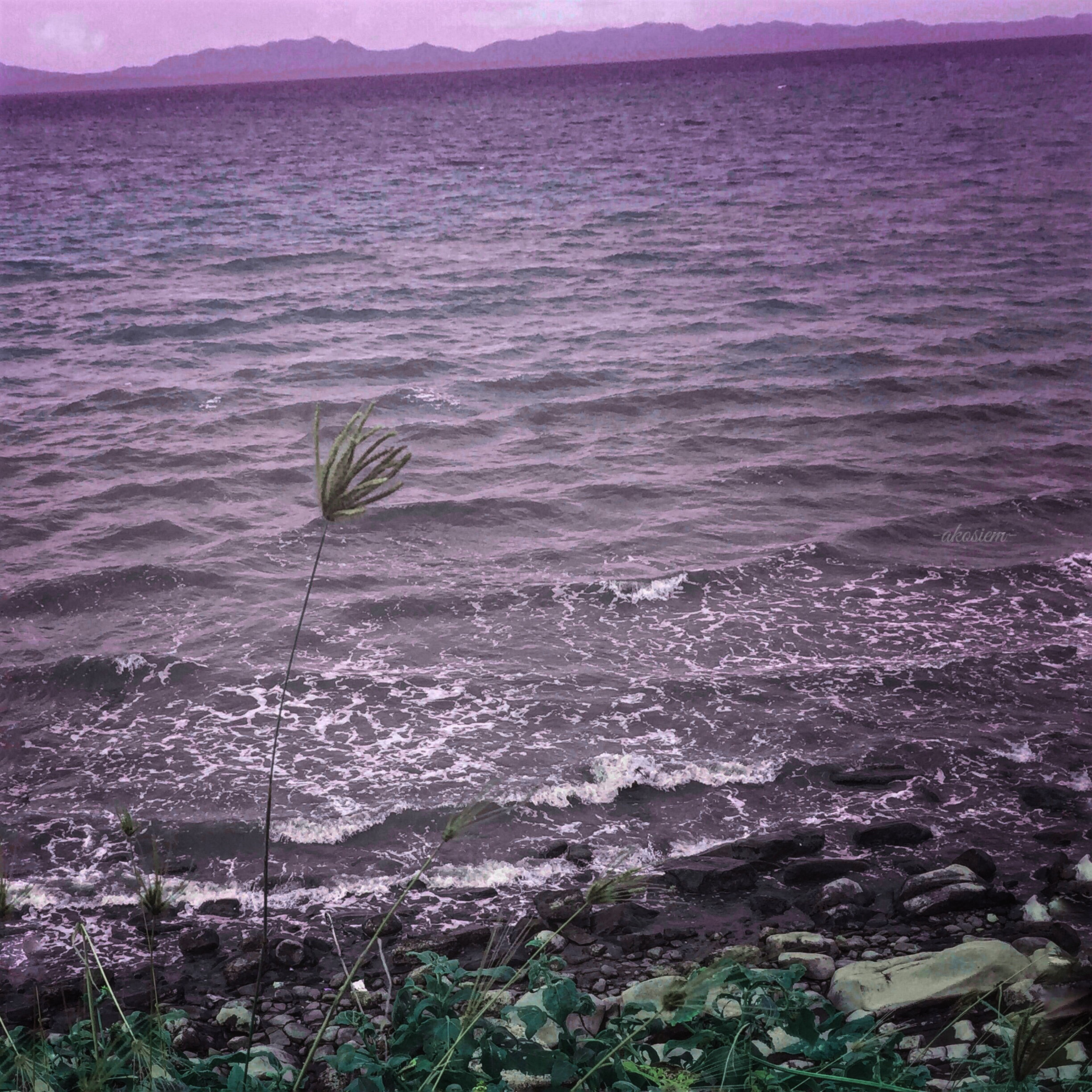 water, sea, tranquil scene, beauty in nature, scenics, tranquility, nature, high angle view, plant, growth, idyllic, coastline, horizon over water, outdoors, no people, day, sky, rippled, remote, landscape
