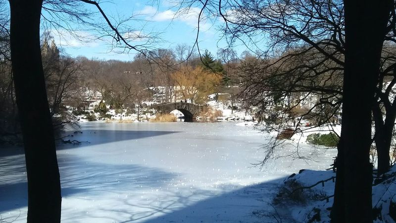 central park new york Central Park New York City Shaddow And Light Snow White Beauty In Nature Winter Winter Wonderland