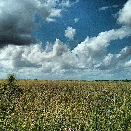 River of Grass Florida Floridaclouds Skydrama Cloudscape
