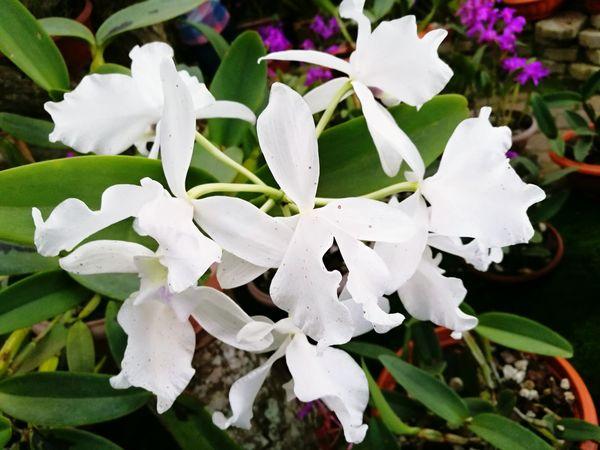 Nature Plant Outdoors Flower Head Close-up Fragility Growth Flowers Jardin Botanico Costa Rica❤ Ilovenature