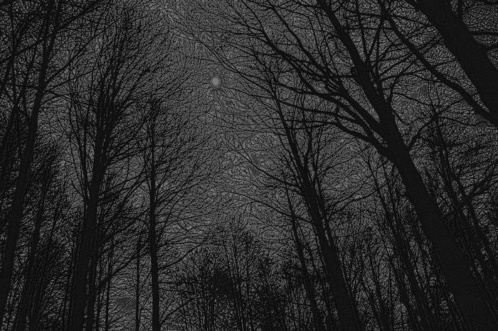 Backgrounds Bare Tree Beauty In Nature Branch Dusk Forest Full Frame Growth Low Angle View Nature Night No People Outdoors Scenics Silhouette Sky Tranquil Scene Tranquility Tree Tree Trunk Timburton TimBurtonStyle bw