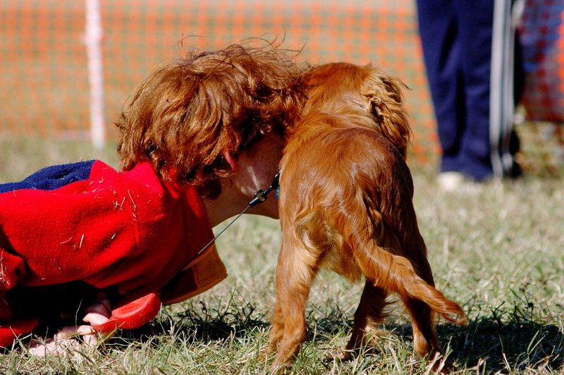 Dog Love Red Red Hair Red Dog One Animal Pets Dogs At Play Dogs And Kids Boy And Dog