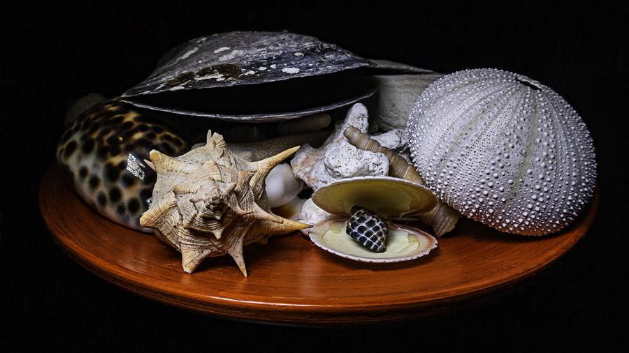 High angle view of shells on table