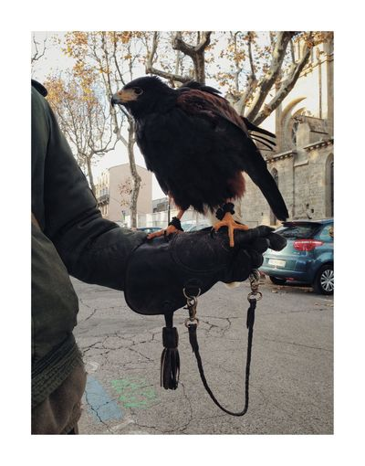 Oiseau-proie Bird One Animal Real People One Person Outdoors Animal Wildlife Day Men Holding Perching Raven - Bird Human Hand Full Length Pets Domestic Animals Nature Close-up Mammal People