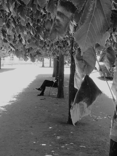 Heatwave in Paris People Peoplephotography People Photography Nature Trees Light And Shadow Light And Shadows Blackandwhite Black And White Black & White