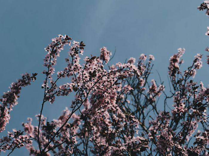 Spring Tree Nature Blossom Flower No People Sunset Sky Day Outdoors Vscofilm Dreiundachtzig Beauty In Nature Grass Plant