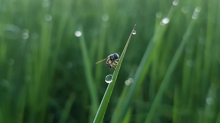 Close-up of ladybug on wet grass