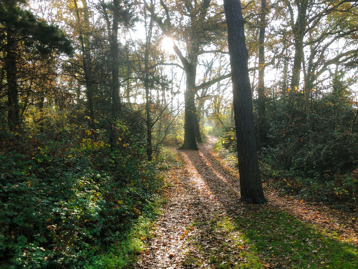 Morning light in the autumn Tree Forest Plant Land Tranquility Direction The Way Forward Tranquil Scene Nature Beauty In Nature Growth Footpath Day Non-urban Scene No People Autumn Scenics - Nature WoodLand Green Color Landscape Outdoors Change Trail Diminishing Perspective Long