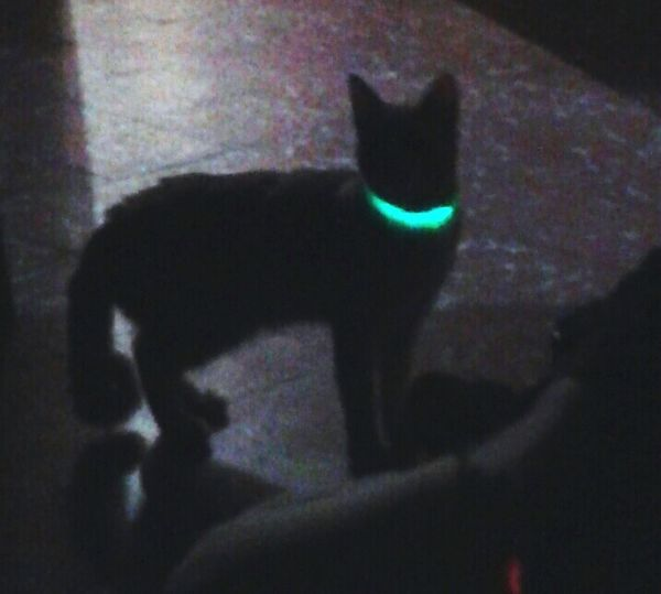 Cat Collar Night Green Light Black Scenery Chair Green Collar Special Shot Cute Original No Filter My Baby Blured