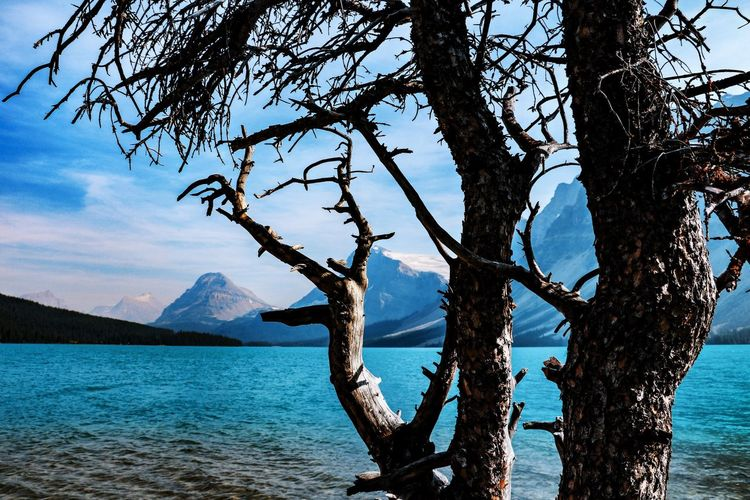 Bow Lake Banff National Park  Canada Water Beauty In Nature Tranquility Tranquil Scene Scenics - Nature Tree Trunk No People Outdoors Tree Nature Trunk