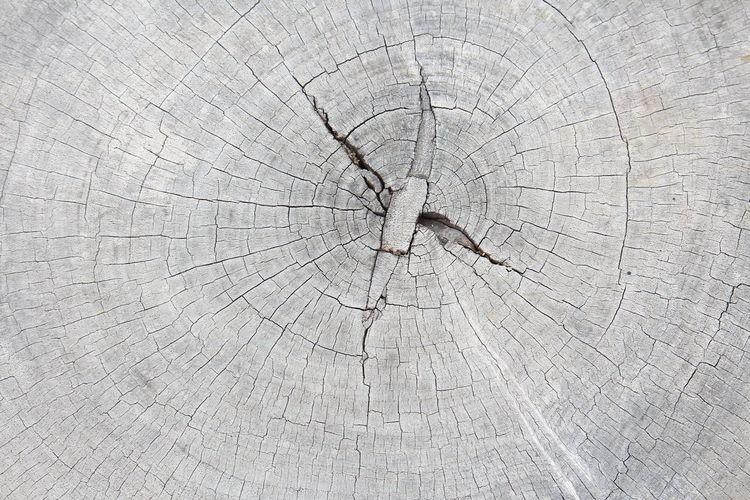 Detail shot of tree stump