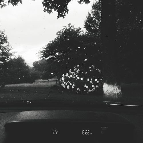 Not for sale Blackandwhite Dark Headlight Tree No People Plant Nature Water Day Outdoors Text Transportation RainDrop Drop Vehicle Interior Car Interior