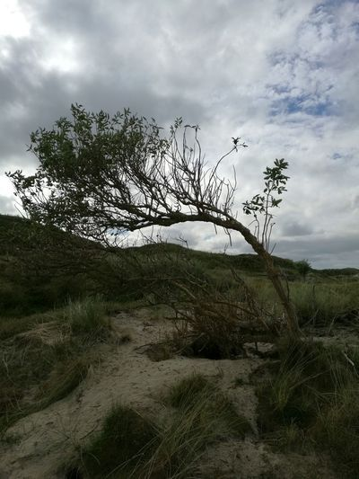 Norderney Norderney Ist Mein Hawaii Cloud - Sky Beauty In Nature Landscape Nature Plant