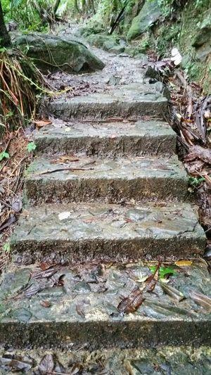 El Yunque Forest Stairway Forest Forestwalk Forest Path Forest Photography Forest Walk Forest Collection