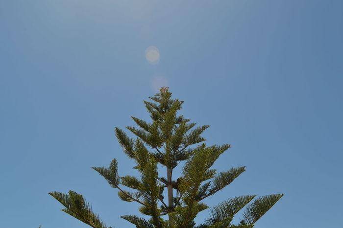 Nature Outdoors Trees Green Australia Travel Rockingham Wild Encounters Sky And Clouds Blue Sky Amateurphotography Nikon D3100