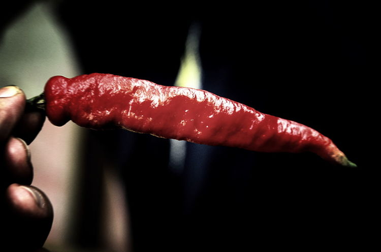 Red Chili Pepper Chili  Chili Pepper Close-up Food And Drink Fruit Hot Human Body Part Human Hand Red Carnival Crowds And Details Cooking Body Change BYOPaper!
