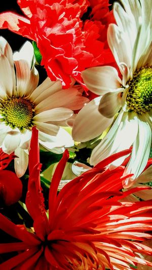 Flower Petal Flower Head Fragility Close-up Red No People Beauty In Nature Full Frame Bouquet Of Flowers Nature Freshness Blooming White Flower Red Flower Boquet Of Flowers Daisy💜 Chrysanthemum Flower EyeEm Gallery Irwin Collection Close Up Nature EyeEm Best Shots Irwin Collection