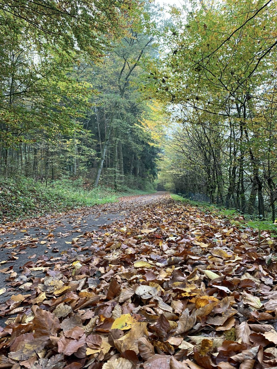 FALLEN LEAVES ON LAND IN FOREST