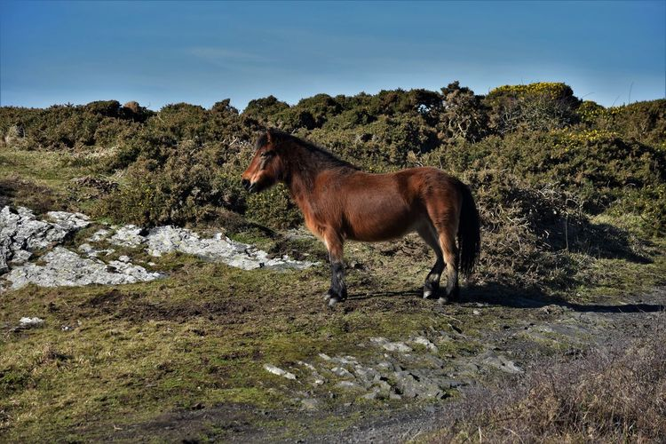 Side view of a horse on mountain
