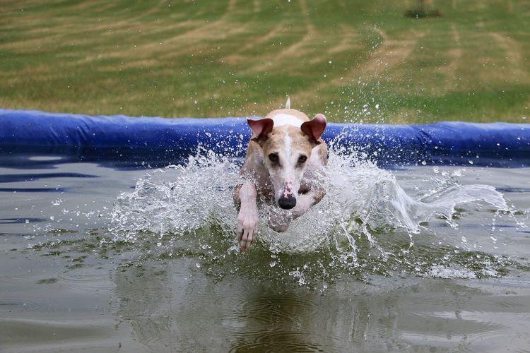 Portrait of dog running in water