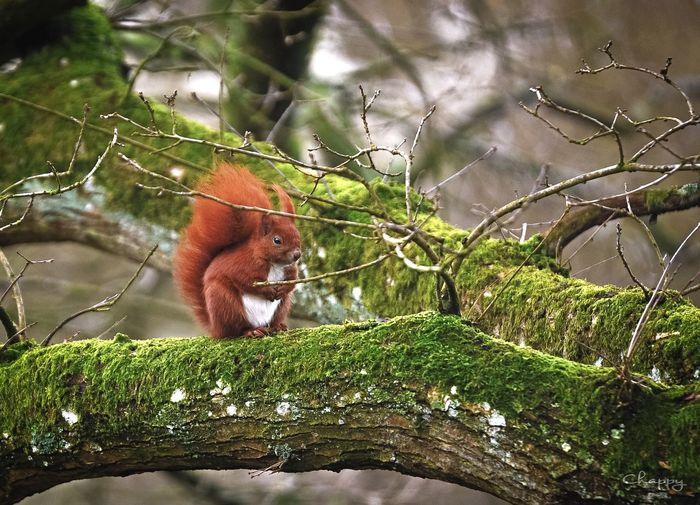 Eichhörnchen 🐿 Animals In The Wild One Animal Animal Wildlife Animal Animal Themes Day Close-up Nature Outdoors Tree