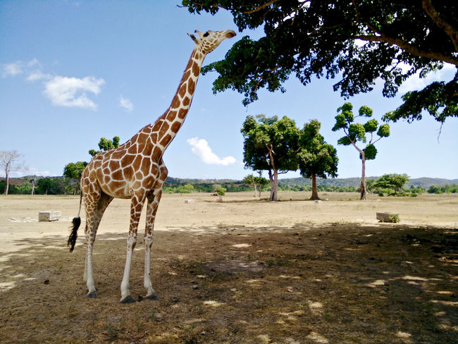 Philippines ❤️ Palawanadventures Busuanga Wildlife & Nature Animals In The Wild Beauty In Nature Travelingtheworld  Travel Destinations Vacations Beauty In Nature