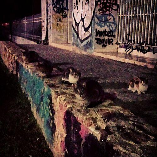 Οι φυλακες του Θησειου! Cats Catia Thisio Greekcats guards