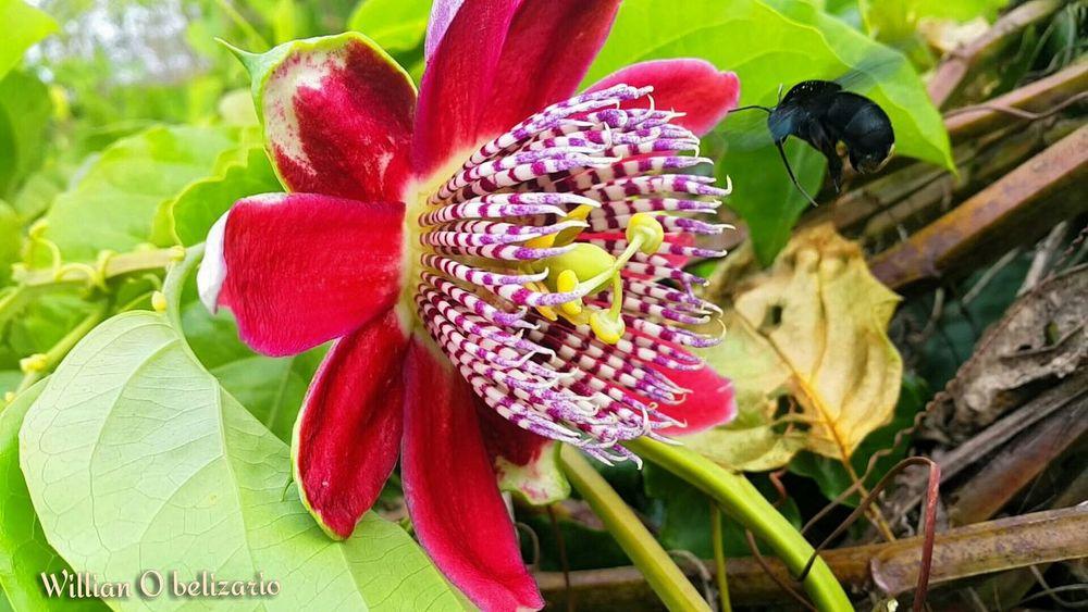 Colour Of Life Selvagem Londrina