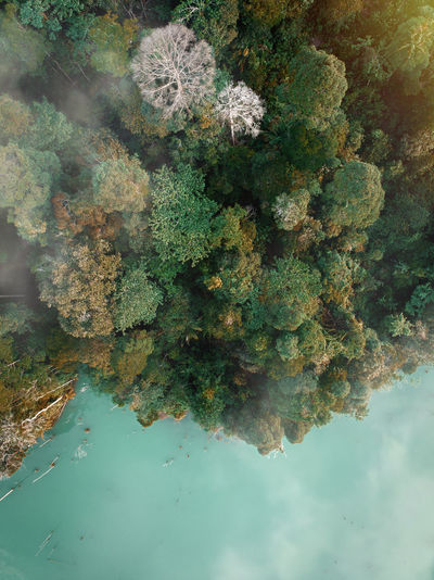 High angle view of plants by lake against sky