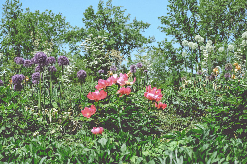 Beauty In Nature Flower Bed Flowers Mixed Flowers Trees Trees And Sky