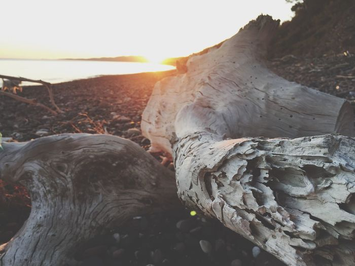 Nature No People Sunlight Outdoors Day Beauty In Nature Close-up Sky Beach Beachphotography Beach Photography Wood Tree Tree Trunk Dead Tree Summer Sunset Greece Mytilene Lesvos Travel Photography Summer Exploratorium Summer Exploratorium Summer Road Tripping The Traveler - 2018 EyeEm Awards