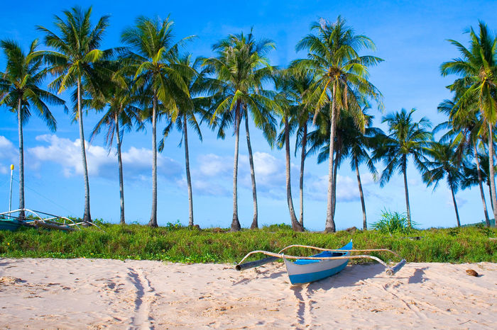 Small fishing boat docked in the sand under a row of coconut trees on the beach Background Bangka Beach Bohol Cebu Coconut Trees El Nido El Nido, Palawan Filipino Culture Fishing Boat Fishing Village Island Hopping Island In The Sun Island Life Island Vacation Island Vibes Island View  It's More Fun In The Philippines Nacpan Palawan Philippines Phillipines Small Boat The Philippines Tiny Boat